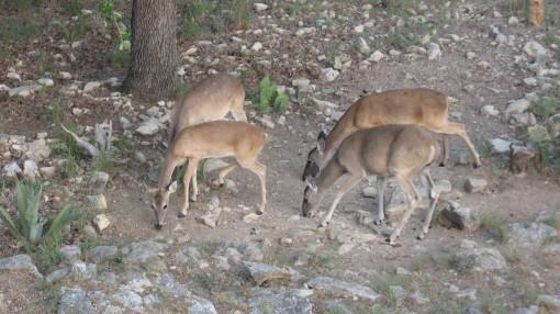 Feeding Charismatic Megafauna