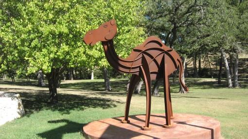 Camp Verde Camel