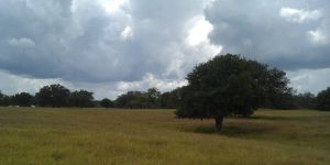 Meadow near Goliad